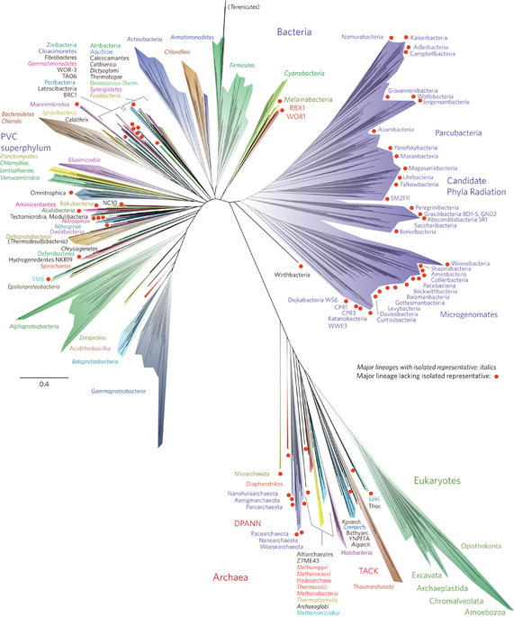 The tree includes 92 named bacterial phyla, 26 archaeal phyla and all five of the Eukaryotic supergroups. Major lineages are assigned arbitrary colours and named, with well-characterized lineage names, in italics. Lineages lacking an isolated representative are highlighted with non-italicized names and red dots. For details on taxon sampling and tree inference, see Methods. The names Tenericutes and Thermodesulfobacteria are bracketed to indicate that these lineages branch within the Firmicutes and the Deltaproteobacteria, respectively. Eukaryotic supergroups are noted, but not otherwise delineated due to the low resolution of these lineages. The CPR phyla are assigned a single colour as they are composed entirely of organisms without isolated representatives, and are still in the process of definition at lower taxonomic levels.