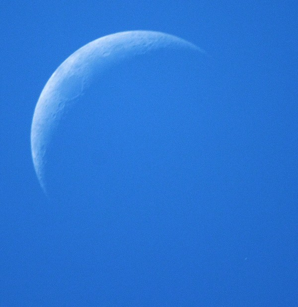 View larger. | Eliot Herman in Tucson caught Aldebaran and the moon in daylight, just as the star was about to disappear behind the moon's disk.