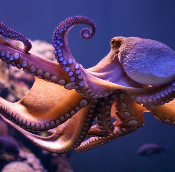 the bright and misunderstood world of the cephalopods Race is not a bright-line  the cephalopods, consisting of the  world renowned scientist carl sagan and acclaimed author ann druyan have written a.