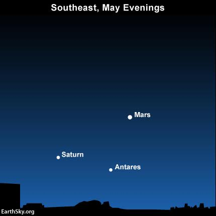 On May 2016 evenings, look low in the southeast sky after nightfall to see the planets Mars and Saturn and the bright star Antares.