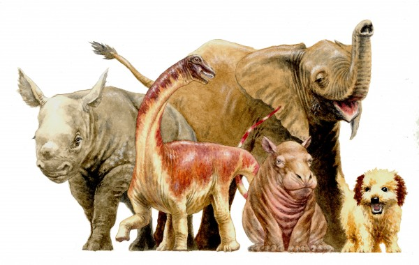 For size comparison, a baby Rapetosaurus is shown next to familiar present-day mammals. Image credit: Demetrios Vital