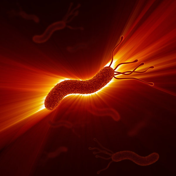 Rendering of bacterium. The Earth Microbiome Project -- a global multidisciplinary project to identify microscope organisms -- has so far cataloged less than 10 million species of the estimated one trillion living on Earth. Image credit: © decade3d / Fotolia