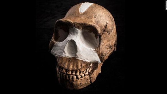 Hominin (Homo naledi). Image Credit: John Hawks, Wits University.