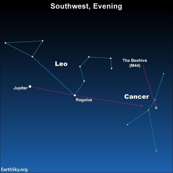 While the moon is still a thin crescent, use the dazzling planet Jupiter to locate the constellation Leo. An imaginary line from Jupiter through the bright star Regulus will enable you to locate the Beehive star cluster in the constellation Cancer. Binoculars transform this wispy cloud-like smudge of light into a sparkling array of stars.