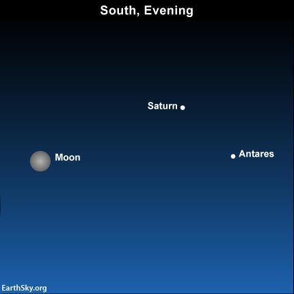 The almost-full moon shines close to the planet Saturn and the star Antares on the eve of the June 20 solstice.