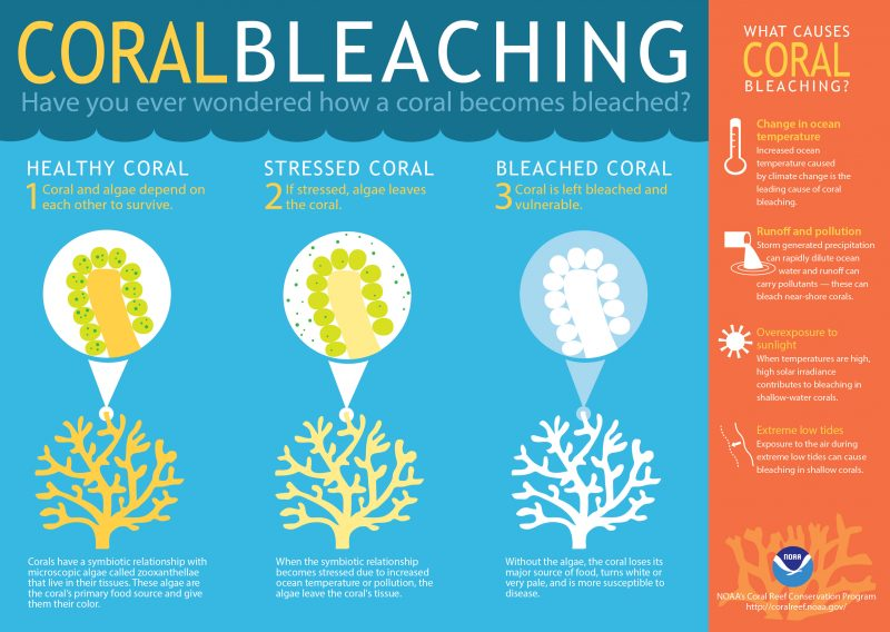 coral-bleaching-infographic