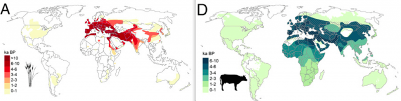 The study maps the spread of crops like wheat (A, in red) and livestock (Cattle, in blue) against the spread of human civilisation. Image via Boivin et al / PNAS