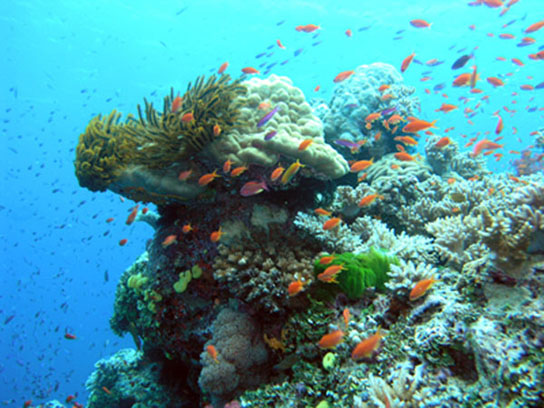 effects of nitrogen on coral reefs in australia Nutrient removal: control of nitrogen and phosphorus in effluent  further  research is required to evaluate the actual effect on gbr coral reef biota of   great barrier reef tourism and australian tourism in general can be expected to  suffer.