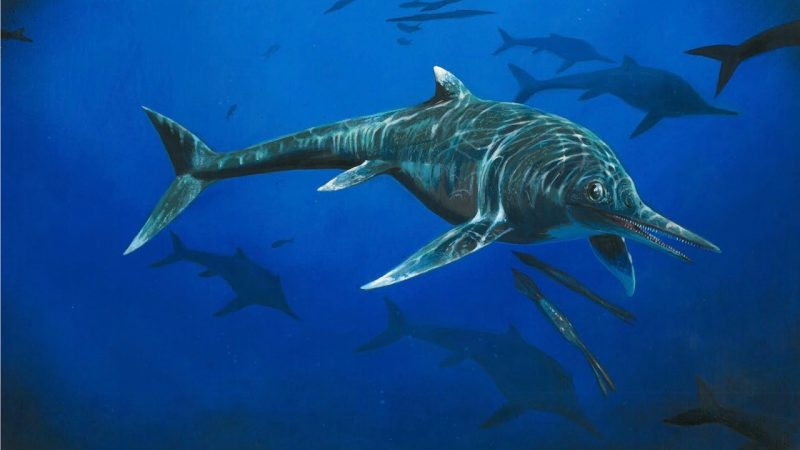 Artist's concept of a 200 million-year-old species of marine reptile, discovered.