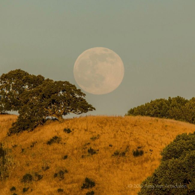 Rising nearly full moon - near San Francisco, California - on June 19, 2016 via EarthSky Facebook friend Amy Van Artsdalen. Last time we had a moon on the solstice was 1967, the Summer of Love.