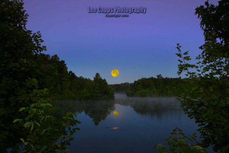Beaver swimming under the setting full moon, in Whitest, North Carolina, by Lee Capps Photography.