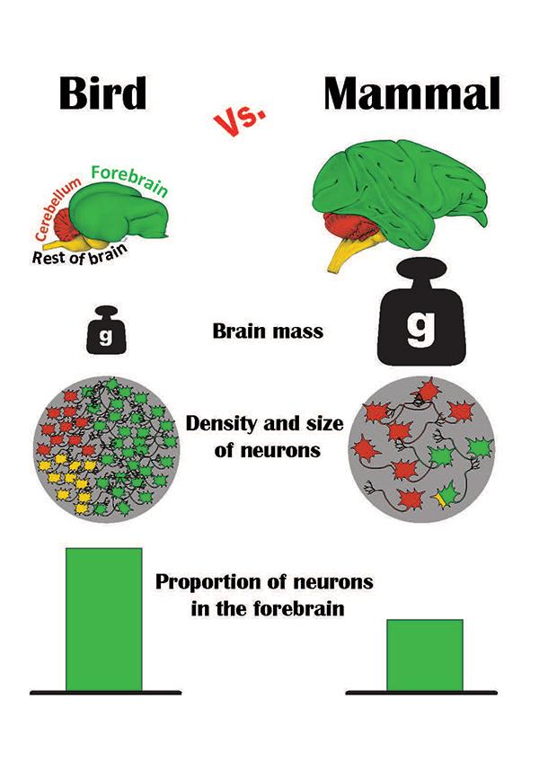 Graphic summary of the study results.  Image via Pavel Nemec, Charles University, Prague / Vanderbilt University