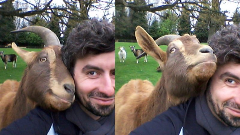 Researcher Christian Nawroth and friend, via Nawroth's website, Farm Animal Cognition.