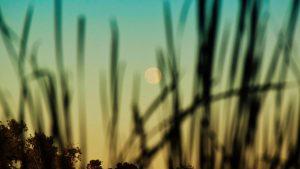 moon-full-7-19-2016-Kristal-Alaimo-Moritz-cp