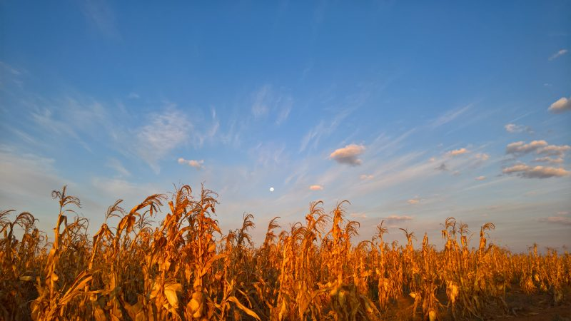 Hennie Rousseau in Northwest Province, South Africa took a this picture of the moon behind his maize crops, just before sunset on July 18, 2016.