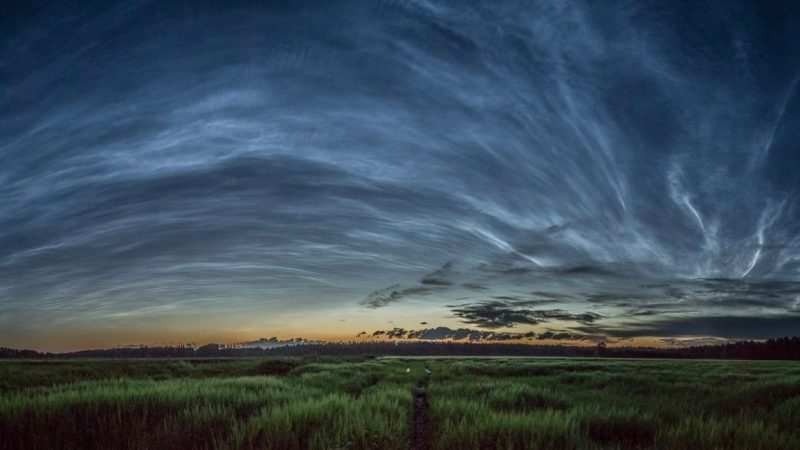 Panorama of sky entirely covered with wispy noctilucent clouds.