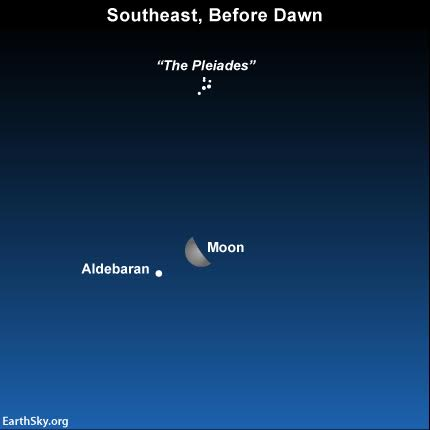 Are you a night owl, staying up past midnight, or an early bird, getting up before dawn? If so, look for  the last quarter moon in close vicinity to the bright star Aldebaran in the morning hours of August 25, 2016..
