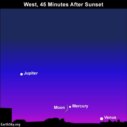 On August 4, 2016, use the slender waxing crescent moon to help guide you to the planet Mercury in between the sky's brightest and second-brightest planets, Venus and Jupiter, respectively. Binoculars may come in handy. Read more.