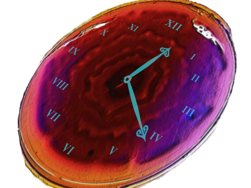 A plate of Enterobacter aerogenes showing the bulls-eye pattern of swarming underneath a stylized clock face. Image via Jiffin Paulose.