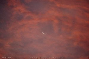 "Greg Diesel-Walck captured the waning moon on August 29, too. He wrote: ""This morning's moon at sunrise in Moyock NC. Very difficult to capture the fading moon in the brilliance of color but this is not a filtered image right off the camera."""