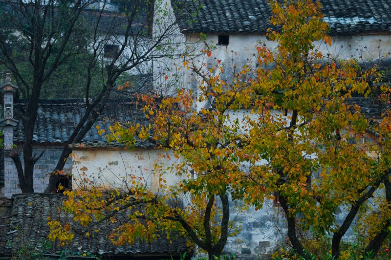 Autumn in Tachuan, China. Image via Xianyi Shen/Flickr