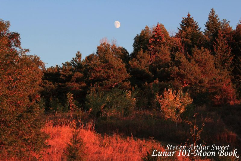 Dark red trees under blue sky with gibbous moon floating above.