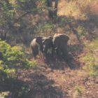 elephant-kiss-peter-lowenstein-sq