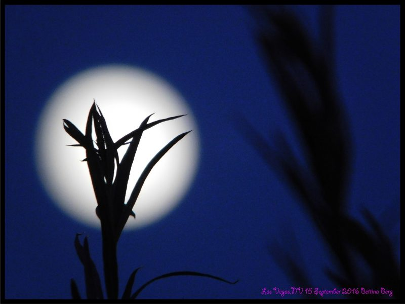Ed Bettina Berg in Las Vegas, Nevada contributed this image of the 2016 Harvest Moon.
