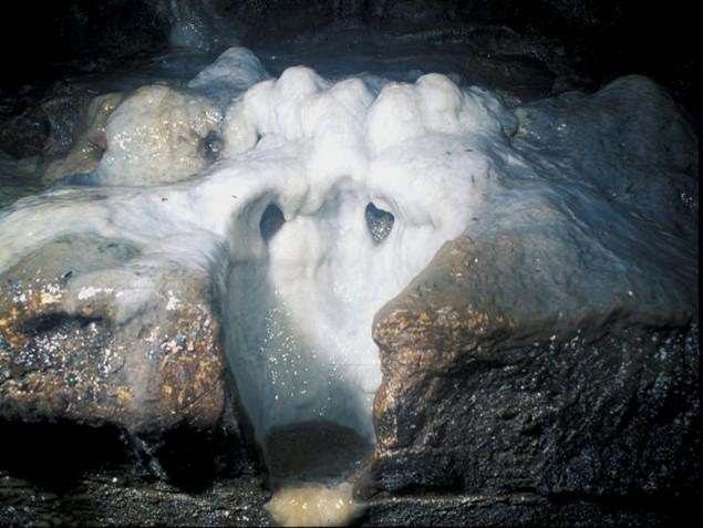 Stalagmite growth on the floor of Fogelpole Cave in southwestern Illinois. Image Credit: S. V. Panno.