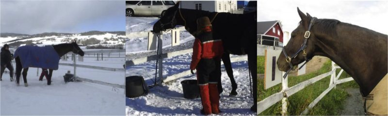 """Horses were presented with symbols on a white wooden board. The horizontal bar on the left means """"put blanket on,"""" the blank board in the middle means """"no change,"""" and the vertical bar on the right means """"take blanket off."""" Image credit: Cecilie M. Mejdell."""