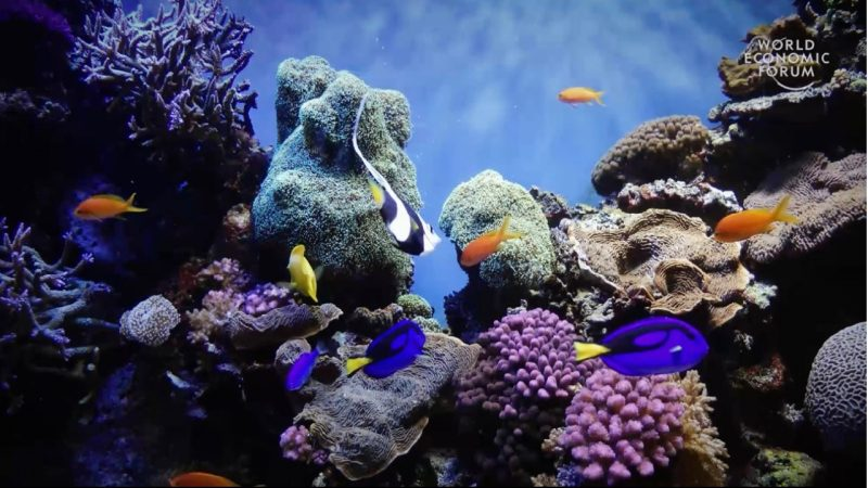 Coral reefs provide examples of