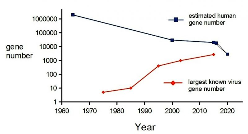 The converging estimated number of genes in a person versus a giant virus. Human line shows average estimate with dashed line representing estimated number of genes needed.  Numbers shown for viruses are for MS2 (1976), HIV (1985), giant viruses from 2004 and average T4 number in the 1990s. Image via Sean Nee.