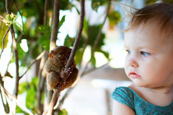 The photo illustrates the small size of the tarsier compared to a child. Imag via Thinkstock