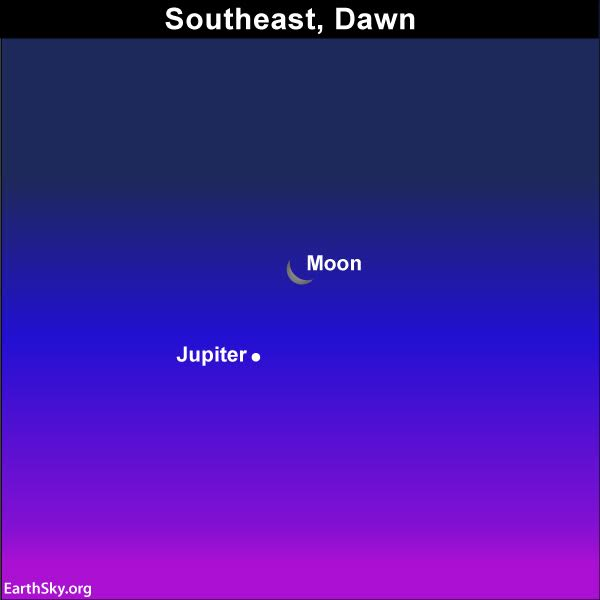From around the world, the waning crescent moon and the king planet Jupiter will adorn the predawn and dawn sky. Look for them before sunrise November 24.
