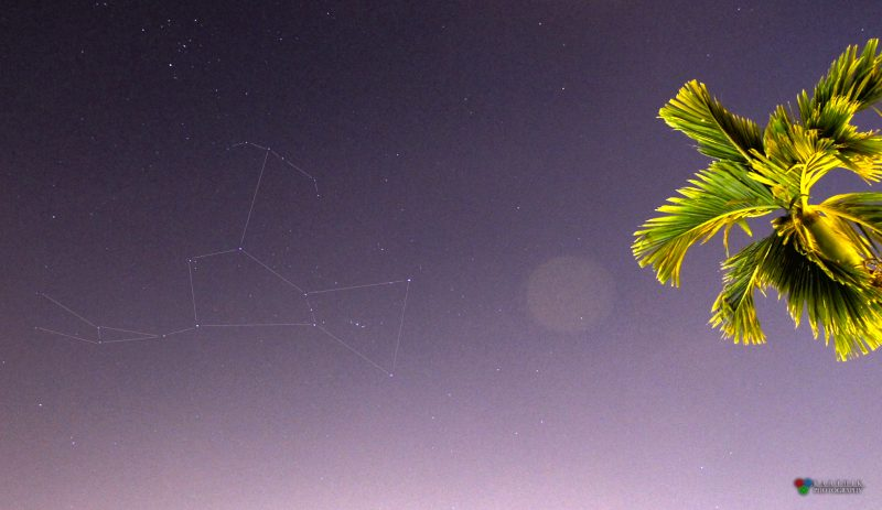 Stars of Orion connected with lines in night sky. Palm tree to right.