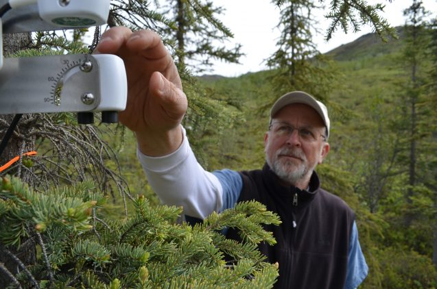Lamont-Doherty plant physiologist Kevin Griffin checks an instrument designed to monitor a spruce tree's photosynthetic activity. Image via