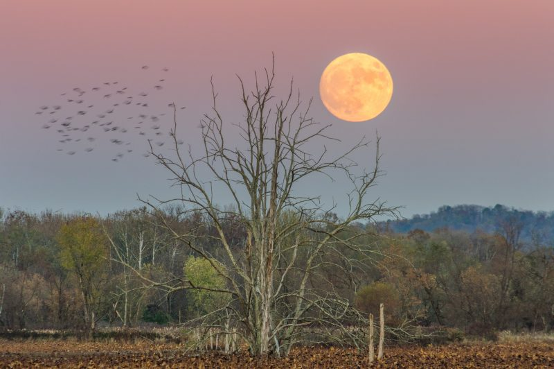 Jesse Thornton in Huntington, West Virginia caught the moon on November 13.