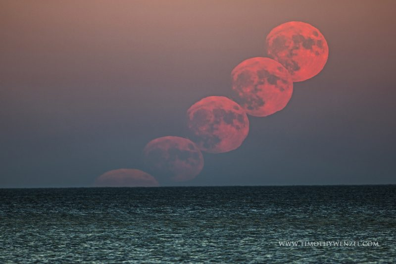 Timothy Wenzel caught the supermoon rising over Saginaw Bay as seen from Linwood Michigan on November 13.  This is a 5-shot composite taken with a 400 mm lens pointed at the same spot on the horizon throughout the approximately 5 minute event.