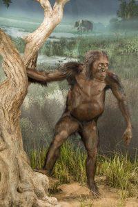 "Adult female Australopithecus afarensis, ""Lucy."" A full body reconstruction by paleoartist John Gurche. Image credit: Smithsonian Institution Human Origins Initiative. https://humanorigins.si.edu/australopithecus-afarensis-lucy-adult-female-full-body-reconstruction-based-al-288-1-artist-john"