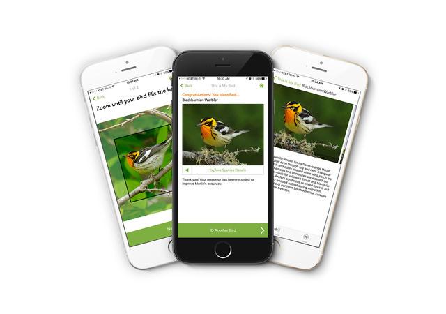 New app identifies birds from photos | Earth | EarthSky