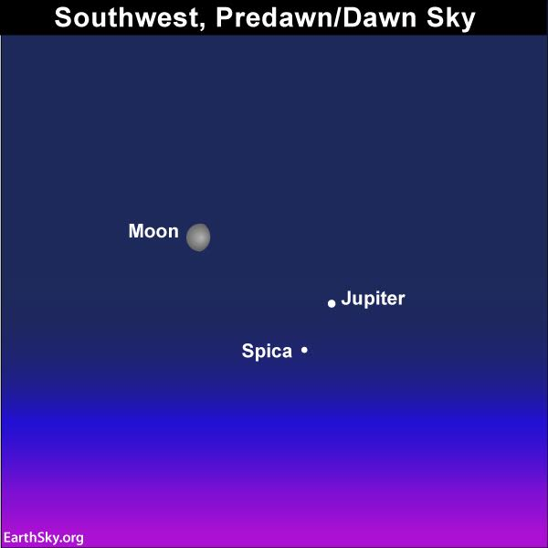 Are you an early riser.?Make sure to see the moon, Jupiter and Spica adorning the predawn/dawn sky.