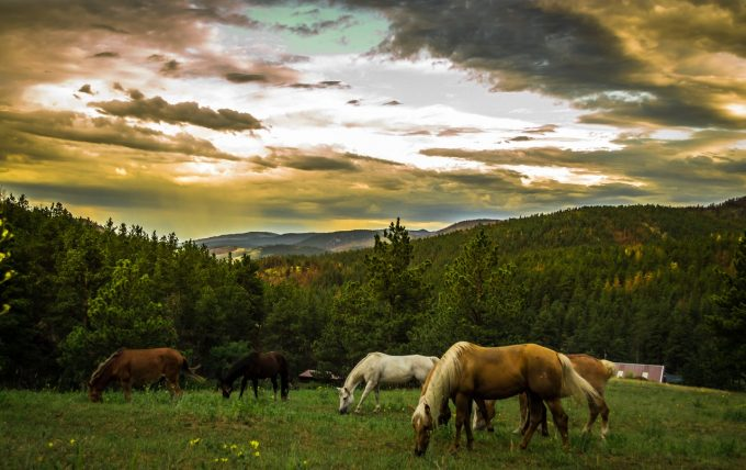 evolution-horses