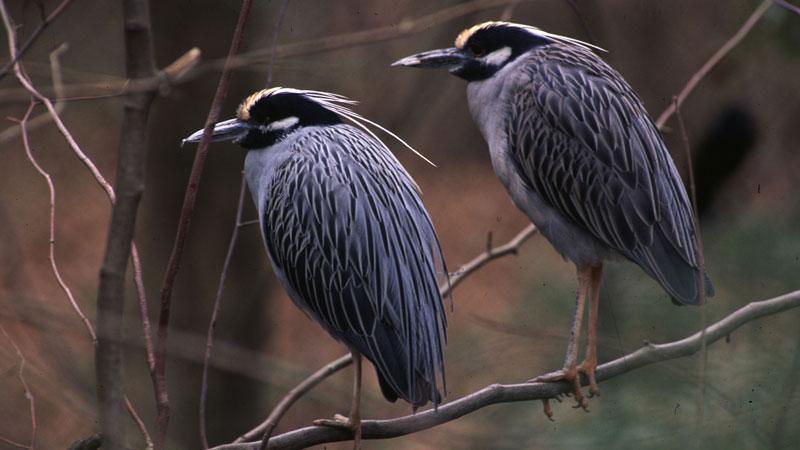 backyard bird count begins february 17 human world earthsky