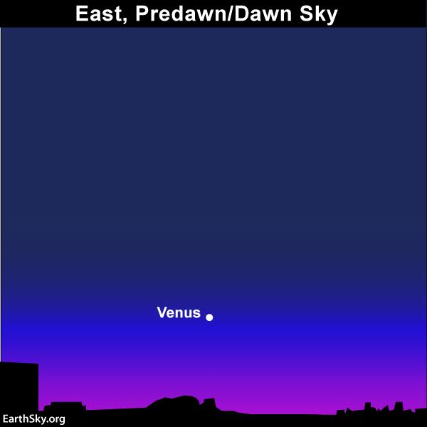 Venus at its brightest in morning sky