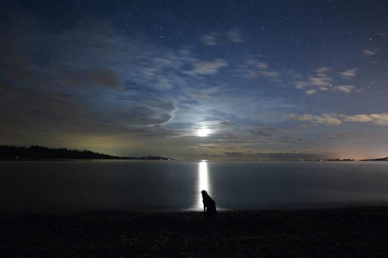 Black dog, rising moon, San Juan Islands