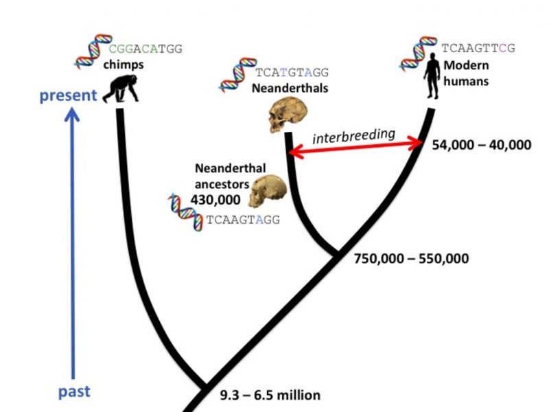 Dna dating and mammal evolution