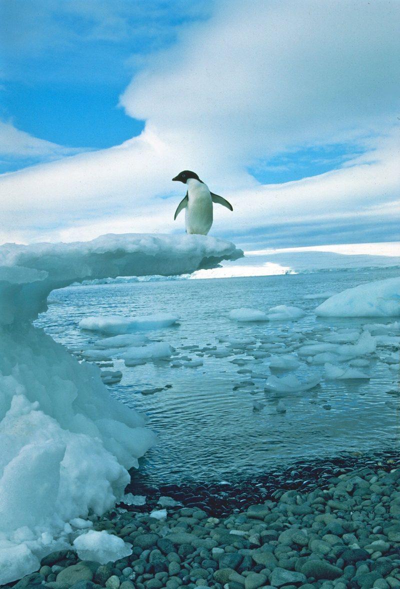 Happy World Penguin Day Penguin-ron-naveen-e1493121378475