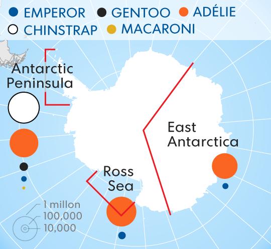 Happy World Penguin Day Penguins-2017-Antarctica