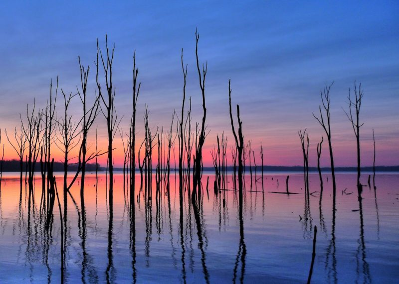Pink along horizon behind tall stick-like trees reflected in a lake.