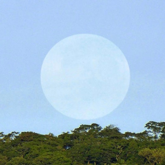 Huge, round, pale white daytime moon against a light blue sky above green treetops.